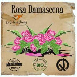 Le Erbe di Janas - Rosa (Damascena)